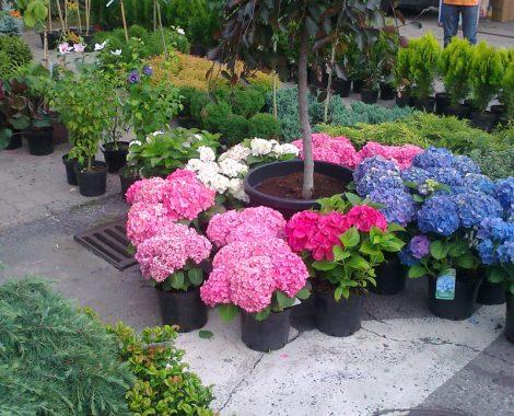 kwiaty 00 (121)